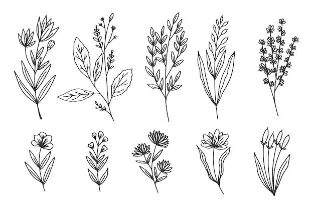Collezione di erbe e fiori selvatici Vettore gratuito