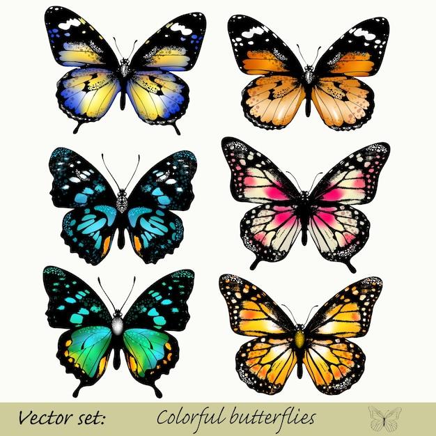 Collezione di farfalle colorate scaricare vettori premium for Foto farfalle colorate