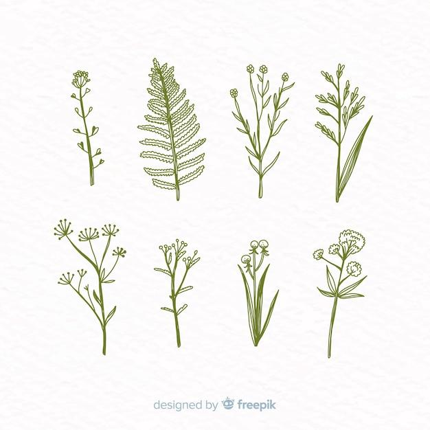 Collezione di fiori botanici disegnati a mano realistica Vettore gratuito