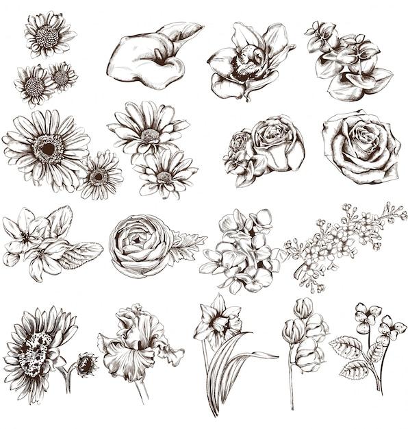 Collezione di fiori d'epoca linea d'arte Vettore Premium