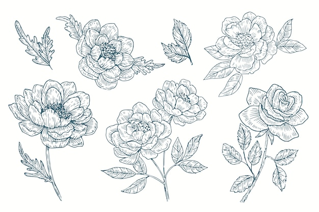 Collezione di fiori di botanica vintage disegnata a mano realistica Vettore gratuito