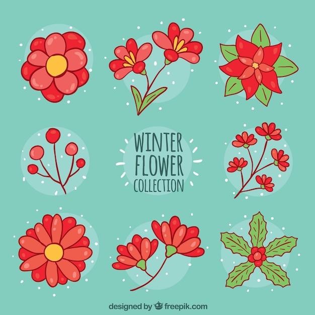 Collezione Di Fiori Invernali Su Uno Sfondo Turchese Scaricare