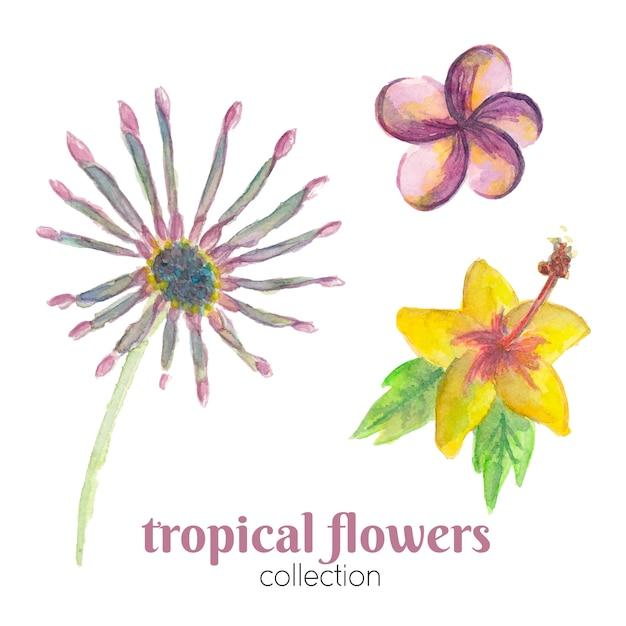 Collezione di fiori tropicali dell'acquerello. Vettore Premium