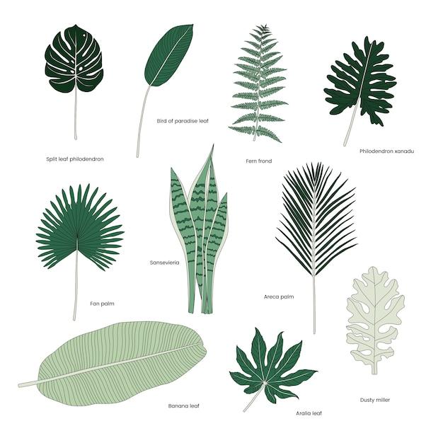 Collezione di foglie tropicali illustrate Vettore gratuito