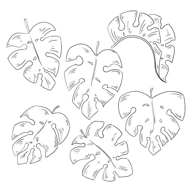Collezione di foglie tropicali Vettore Premium