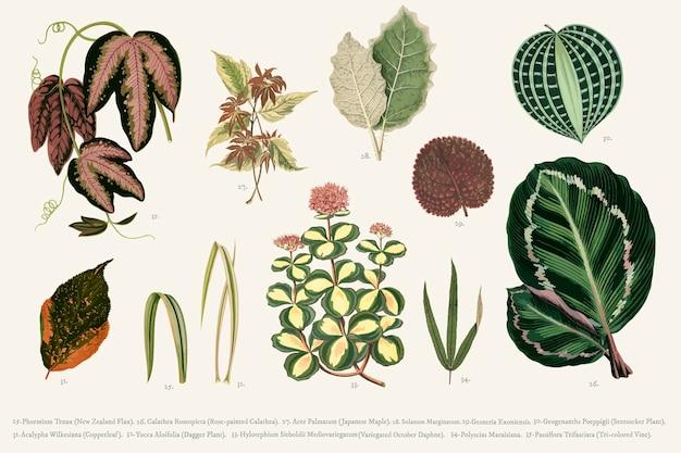Collezione di foglie Vettore gratuito
