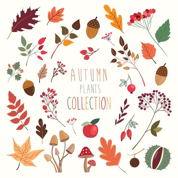 Collezione di piante e foglie decorative autunnali for Piante decorative