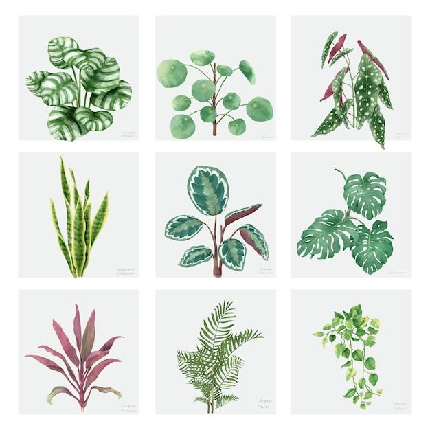 Collezione di piante ornamentali disegnate a mano Vettore gratuito