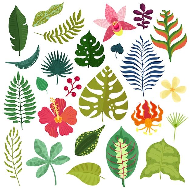 Collezione di piante tropicali Vettore gratuito