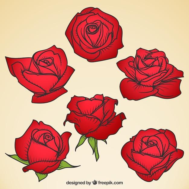 Collezione Di Rose Rosse Con Disegni Diversi Scaricare Vettori Gratis