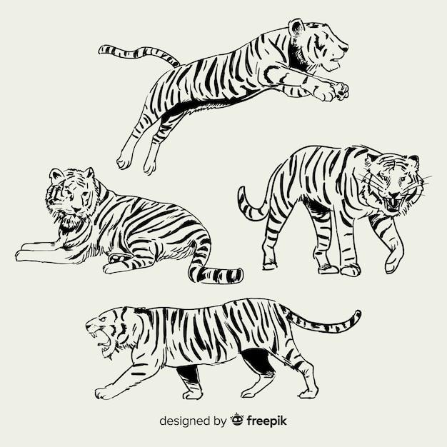 Collezione di tigre selvaggia disegnata a mano Vettore gratuito