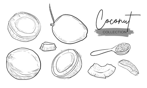 Collezione di tratteggio di schizzi del disegno della mano della fetta della noce di cocco Vettore Premium