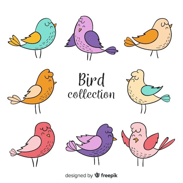 Collezione di uccelli colorati disegnati a mano Vettore gratuito