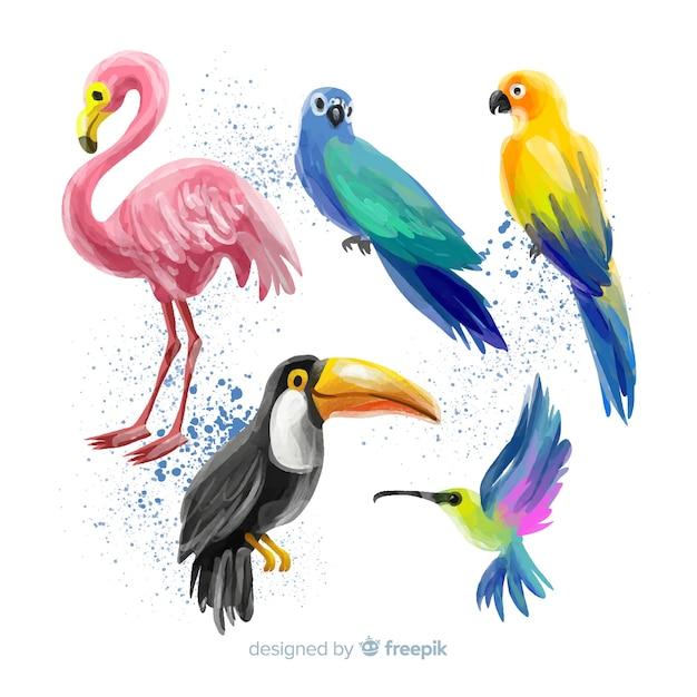 Collezione di uccelli esotici in stile acquerello Vettore gratuito