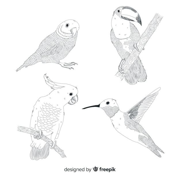 Collezione di uccelli selvatici tropicali esotici Vettore gratuito