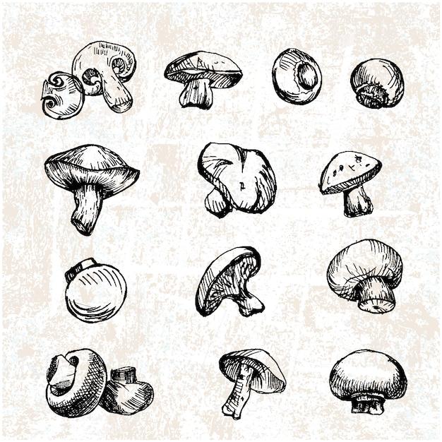 Collezione disegnata a mano funghi Vettore gratuito