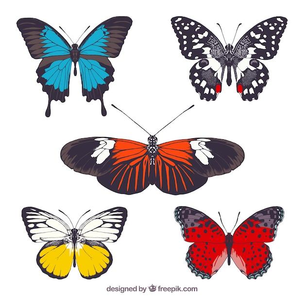 Collezione farfalle colorate scaricare vettori gratis for Foto farfalle colorate