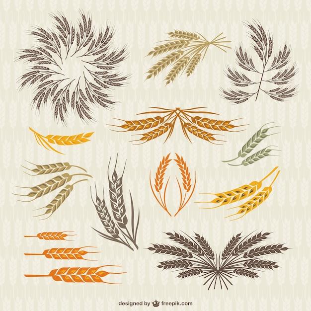Collezione vintage di corona e spighe di grano Vettore gratuito
