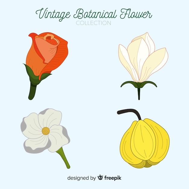 Collezione vintage di fiori botanici Vettore gratuito