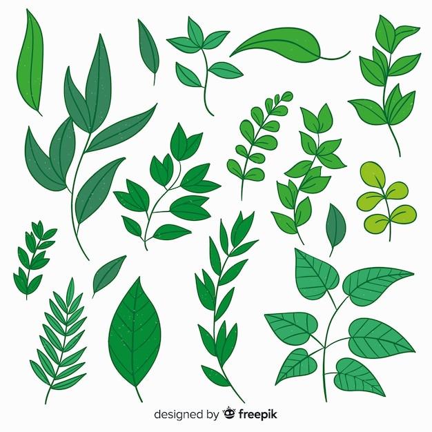 Collezione vintage di foglie botaniche Vettore gratuito