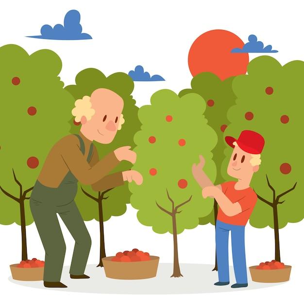 Coltivatore che raccoglie il raccolto di mele ai cestini. Vettore Premium