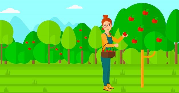 Coltivatore che raccoglie le mele. Vettore Premium