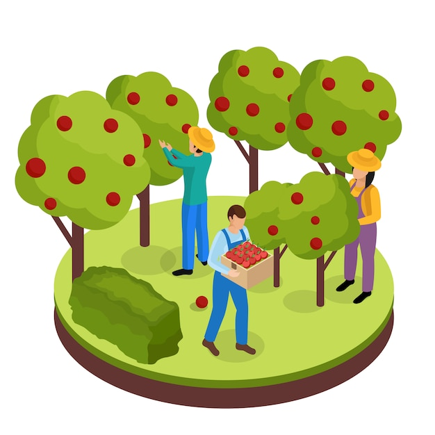 Composizione isometrica di vita degli agricoltori ordinari con tre operai dello spazio verde che raccolgono frutti dagli alberi circostanti Vettore gratuito