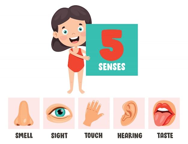 Concetto di cinque sensi con organi umani per bambini Vettore Premium