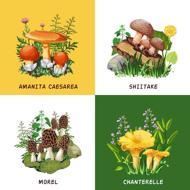 Concetto di design di funghi selvatici Vettore gratuito
