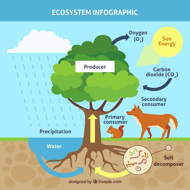 Concetto di ecosistema infografica con albero Vettore gratuito