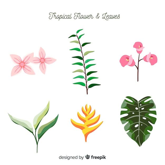 Confezione di foglie e fiori tropicali Vettore gratuito