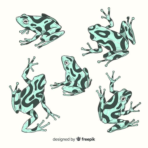 Confezione di rana disegnata a mano Vettore gratuito
