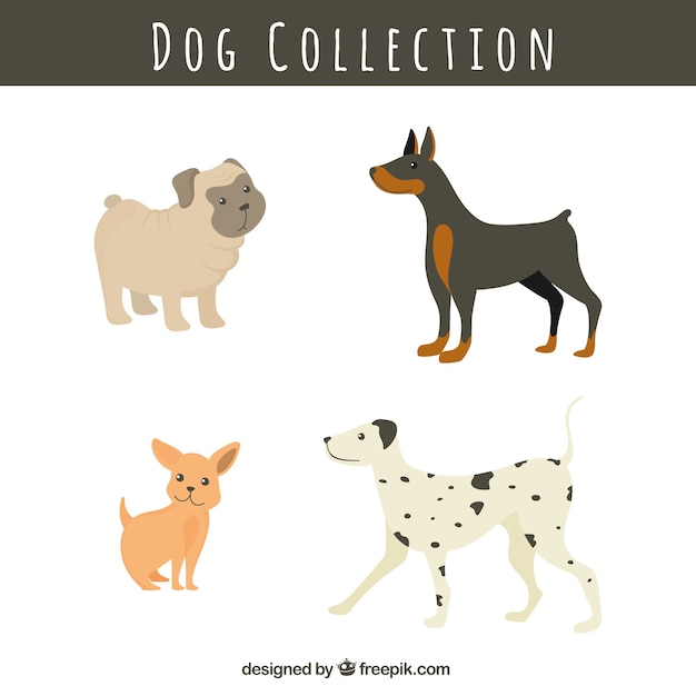 Confezione di razze canine Vettore gratuito