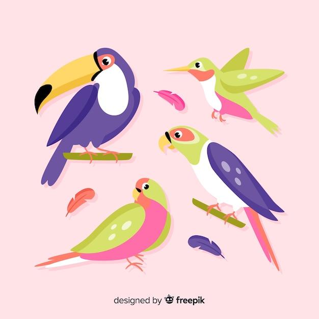 Confezione di uccelli esotici piatti Vettore gratuito