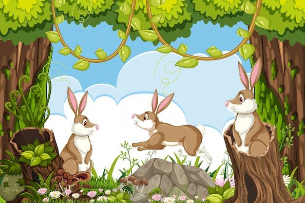 Conigli nella scena della giungla Vettore Premium