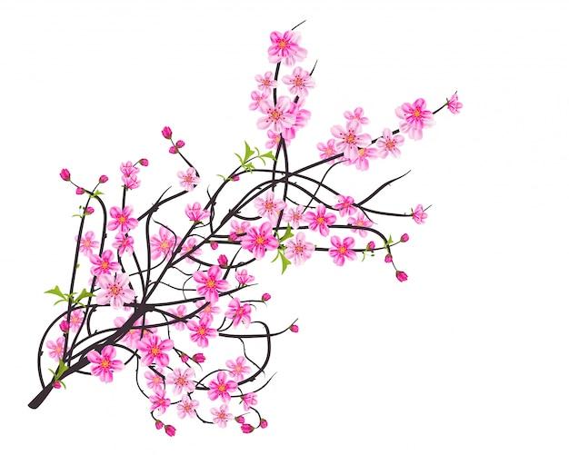Cornice acquerello sakura. sfondo con rami di ciliegio in fiore. Vettore Premium
