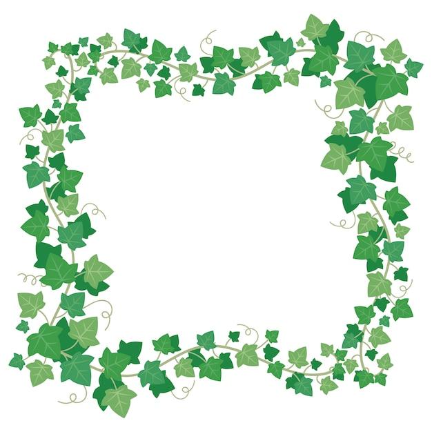 Cornice di foglie di edera verde Vettore Premium