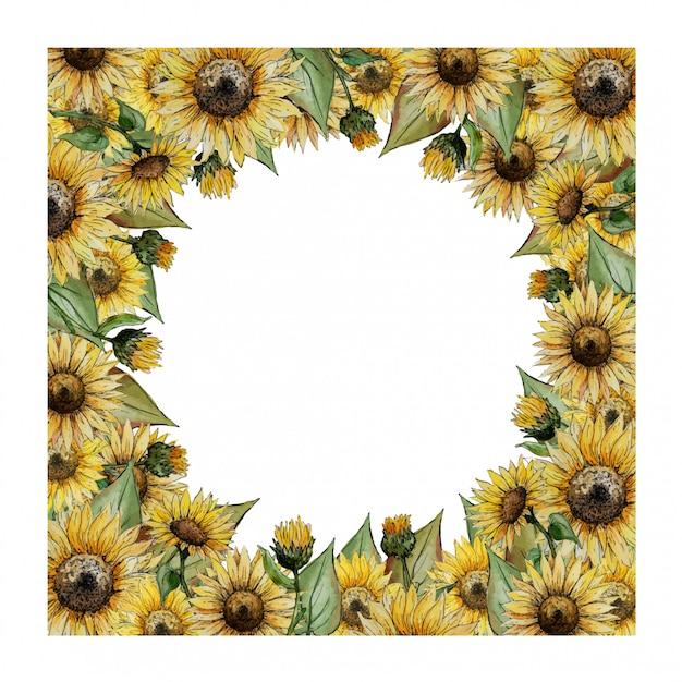 Cornice quadrata dell'acquerello con girasoli gialli Vettore Premium