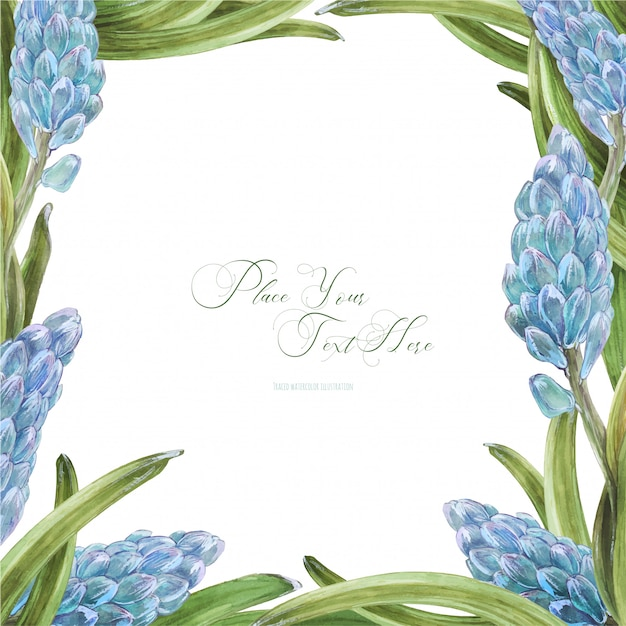 Cornice quadrata dell'acquerello di primavera con fiori di giacinto Vettore Premium