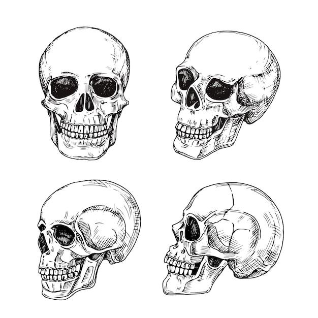 Cranio umano. teschi disegnati a mano schizzo disegno tatuaggio morte vintage isolato Vettore Premium