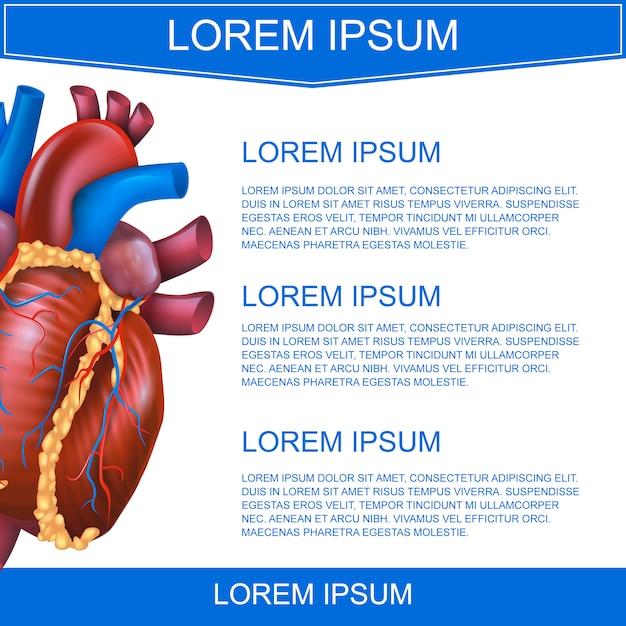 Cuore di sistema medico illustrazione vettoriale realistico Vettore Premium