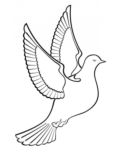Delineato Uccello Colomba Scaricare Vettori Gratis