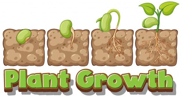 Diagramma che mostra come le piante crescono dal seme Vettore gratuito