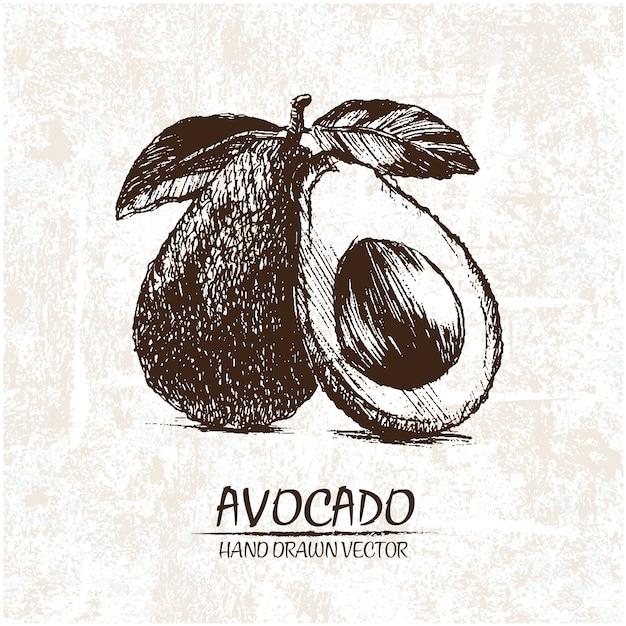 Disegnata a mano disegno di avocado Vettore gratuito