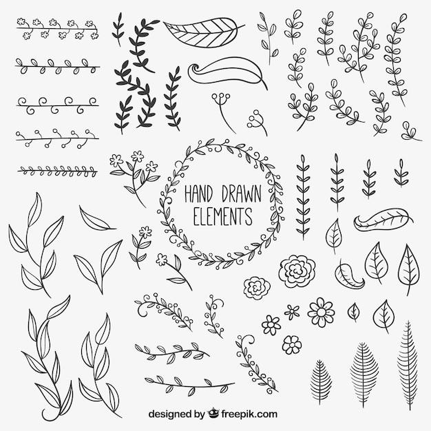 Disegnati a mano elementi di decorazione naturale Vettore gratuito