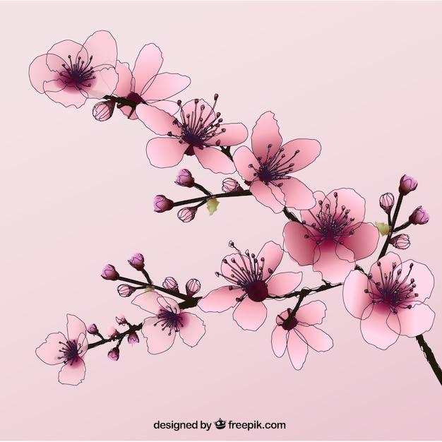 Disegnati a mano fiori di ciliegio scaricare vettori gratis for Fiori disegnati