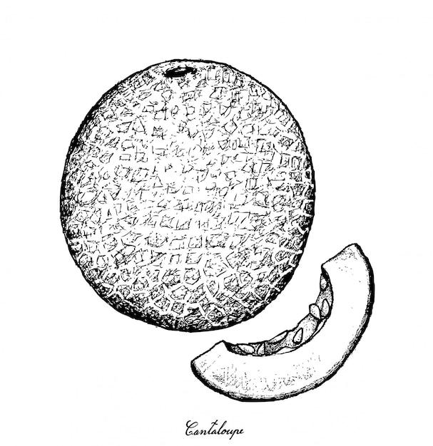 Disegnato a mano di frutta cantalupo Vettore Premium