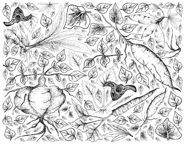 Disegnato a mano di radice e tubero verdure sfondo Vettore Premium