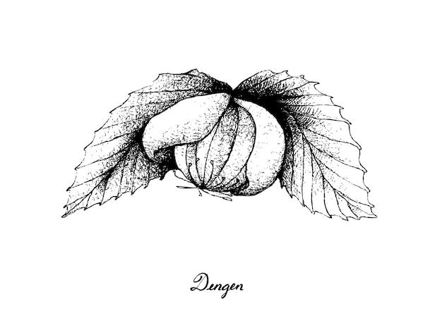 Disegnato a mano di una frutta fresca di dengen Vettore Premium