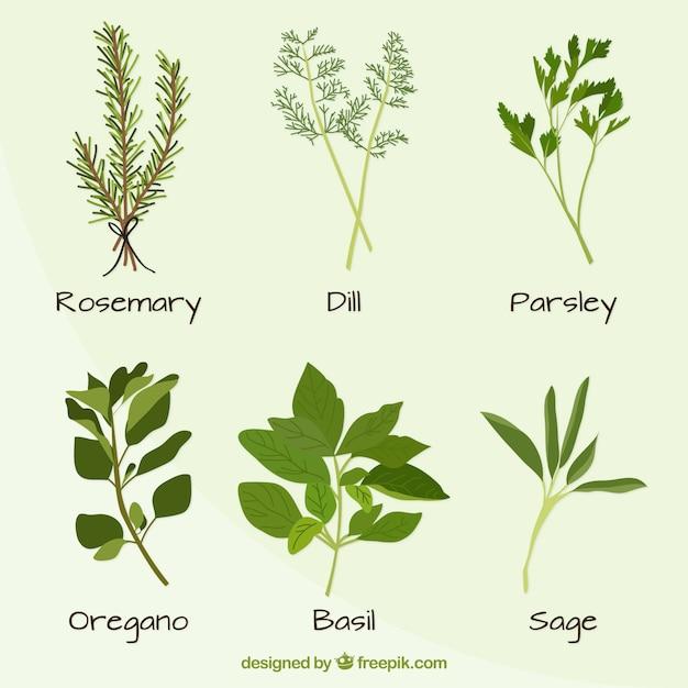 Disegnato a mano varietà di piante set Vettore Premium